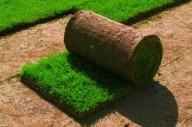Рулонные газоны – как идеальное обустройство придомовой территории