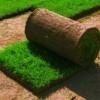 Секреты выбора рулонного газона